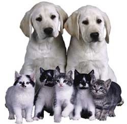 puppies_kittens